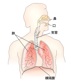 呼吸器.png